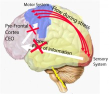 stressed functioning of the brain