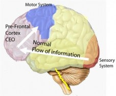 Normal functioning of the brain